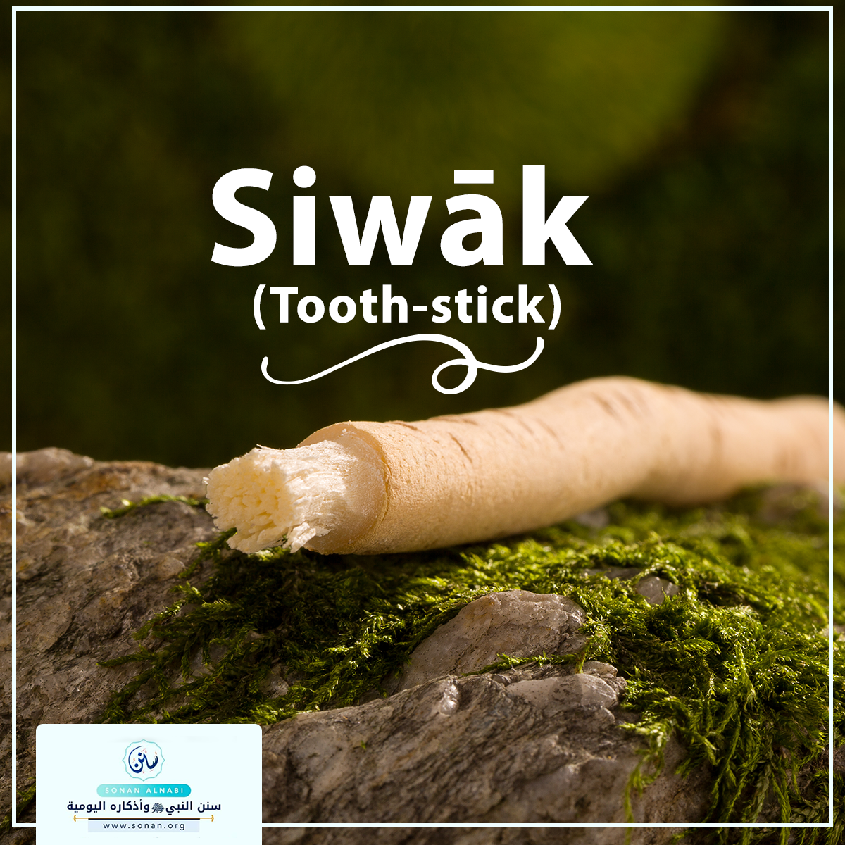 Siwāk (Tooth-stick